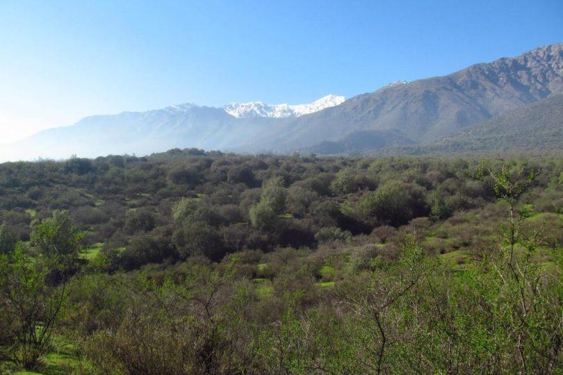 Tribunal ambiental ordena retirar arenas de bosque Panul por riesgo de remoción