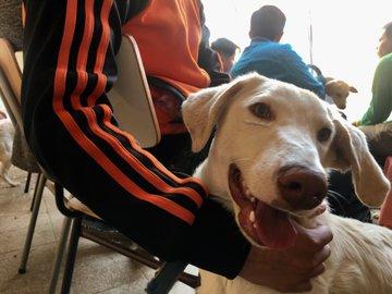 """""""Adolescentes del Sename realizan terapia de reinserción entrenando a perros abandonados"""""""