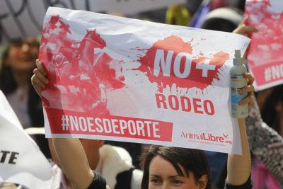Animal Libre anuncia primera formalización por maltrato en domadura dieciochera