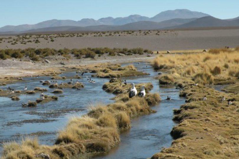 Corte de La Haya dio plazo para que Chile entregue nuevo escrito por Río Silala