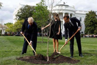 """Murió el """"árbol de la amistad"""" que Trump y Macron plantaron en la Casa Blanca"""