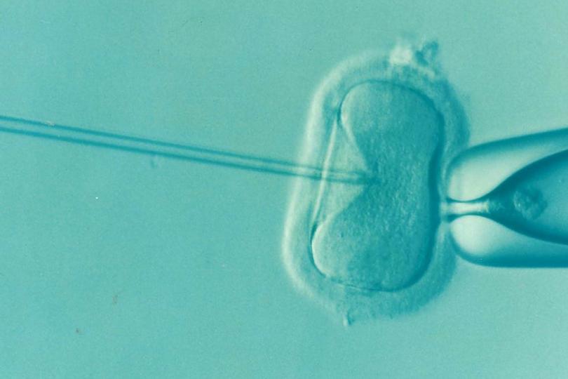 El programa de infertilidad de Piñera