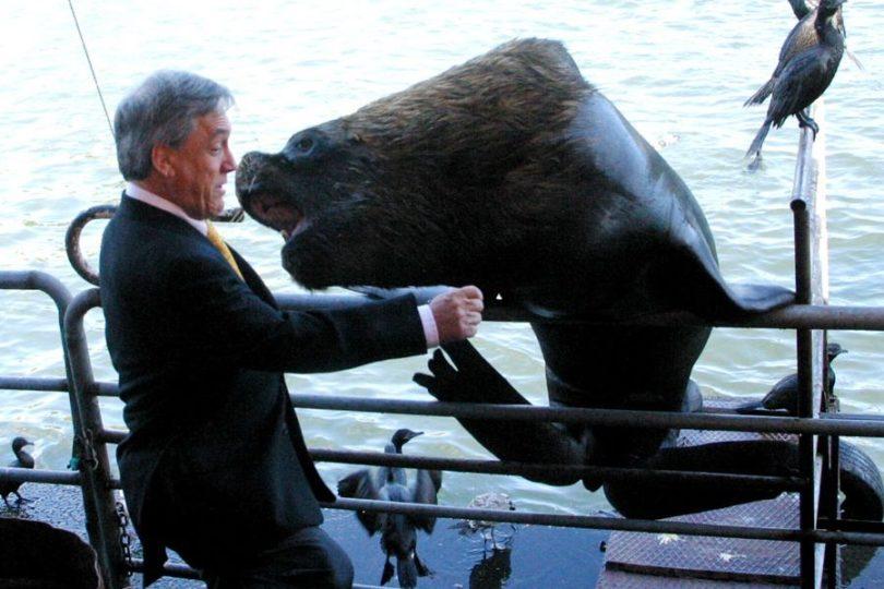 """""""El océano una vez me echó la foca"""": el recuerdo de Piñera para celebrar el Día del Medio Ambiente"""