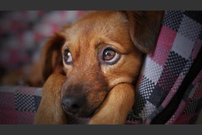 ¿Por qué nadie puede resistirse a la mirada triste de un perro?