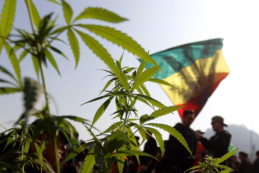 """""""Senda busca determinar la potencia de la marihuana que se consume en Chile"""""""