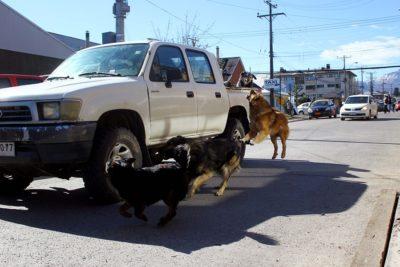 Biobío: capturan a jauría de perros que atacaba a vecinos en Concepción