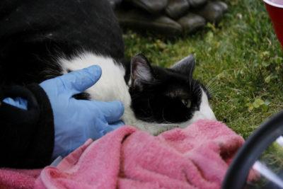Mujer denunció que su gata fue violada por un hombre en Quilpué