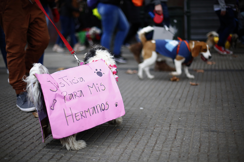 Se sumaron a Camila Flores: diputados RN impulsan inédito proyecto que crea el delito de zoofilia