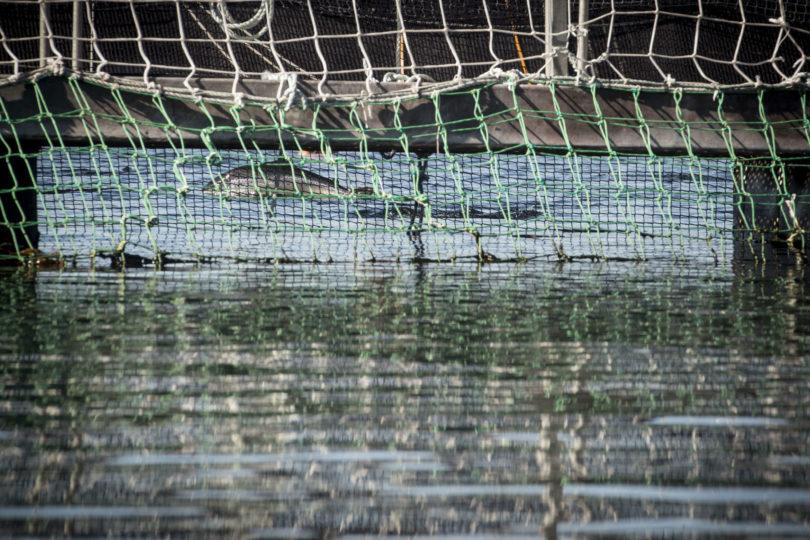 """Greenpeace por Nova Austral: """"Lo grave es que puede que sea una práctica más bien extendida"""""""