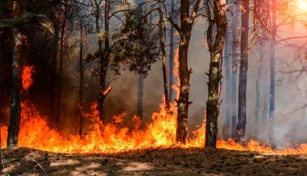 Dramáticos incendios amenazan el permafrost del Ártico