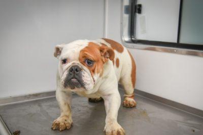 Publican listado de los animales rescatados de criadero ilegal en Providencia