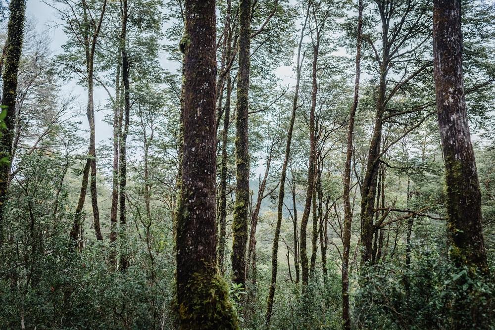 Enfrentando el Cambio climático: ¿Cuál es el rol de los árboles en este desafío?