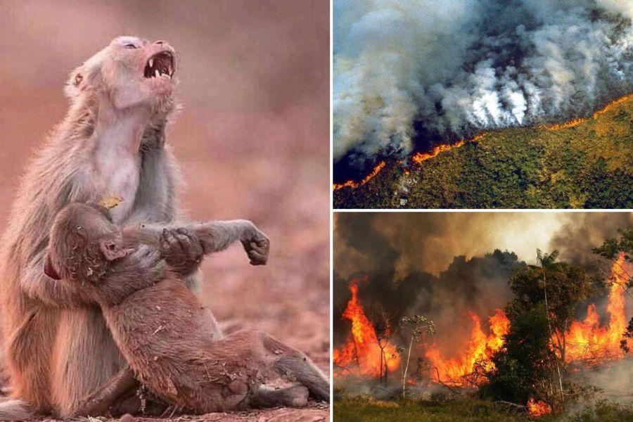 """""""FOTOS   Las imágenes de los incendios en la Amazonía que resultaron ser falsas"""""""