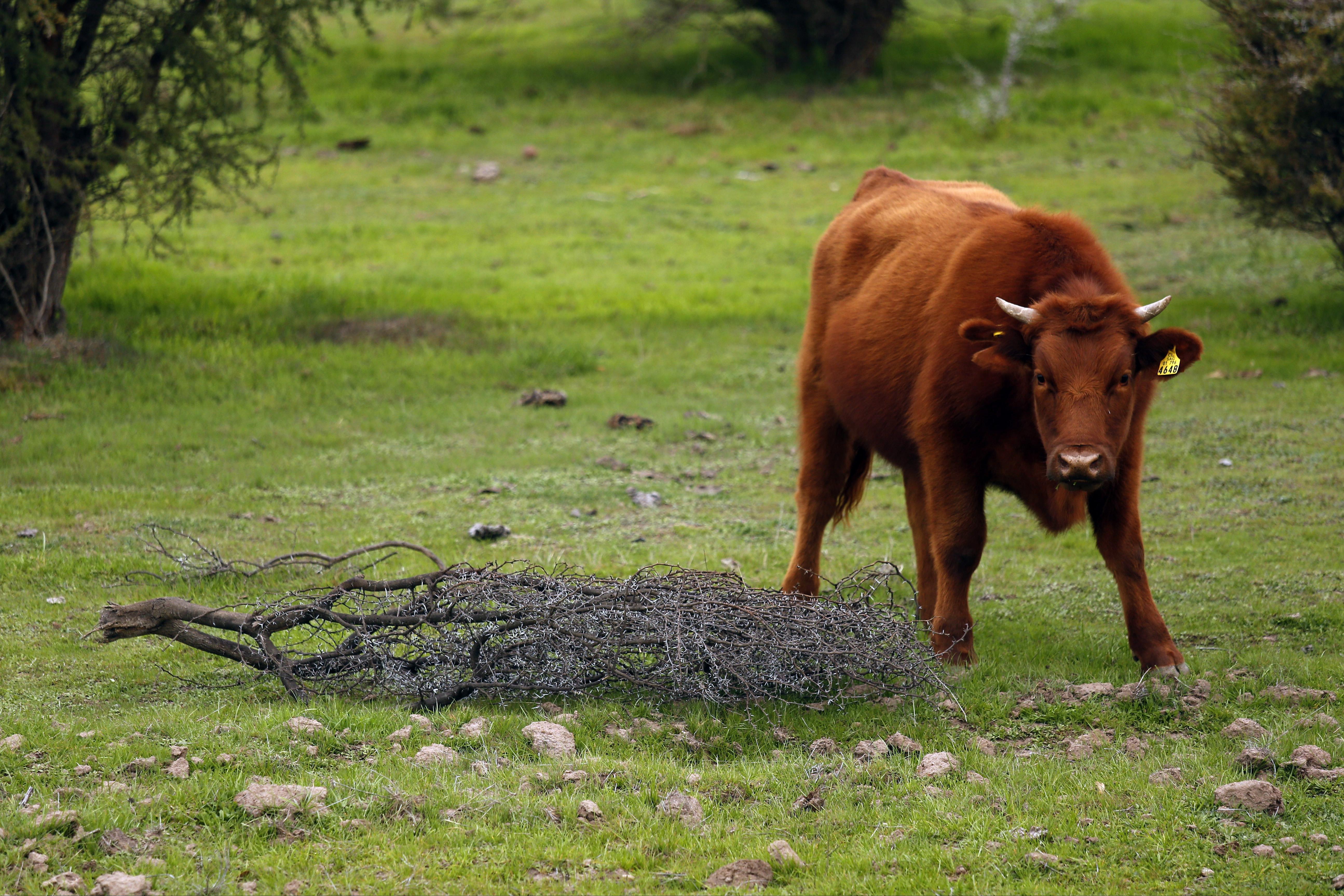 """Agricultura apunta a """"estar mejor preparados"""" por los efectos de la sequía"""
