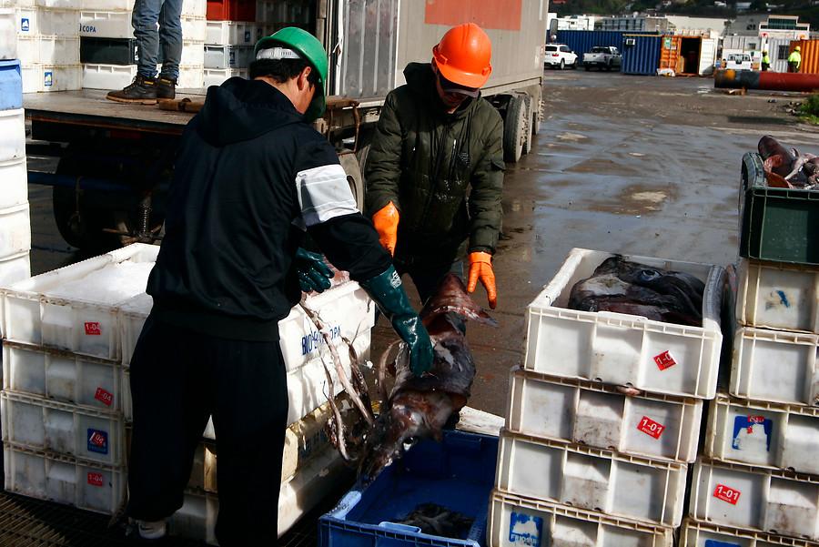 Despedirán a 232 trabajadores: Landes anuncia cierre de planta en Talcahuano apuntando a Ley de la Jibia