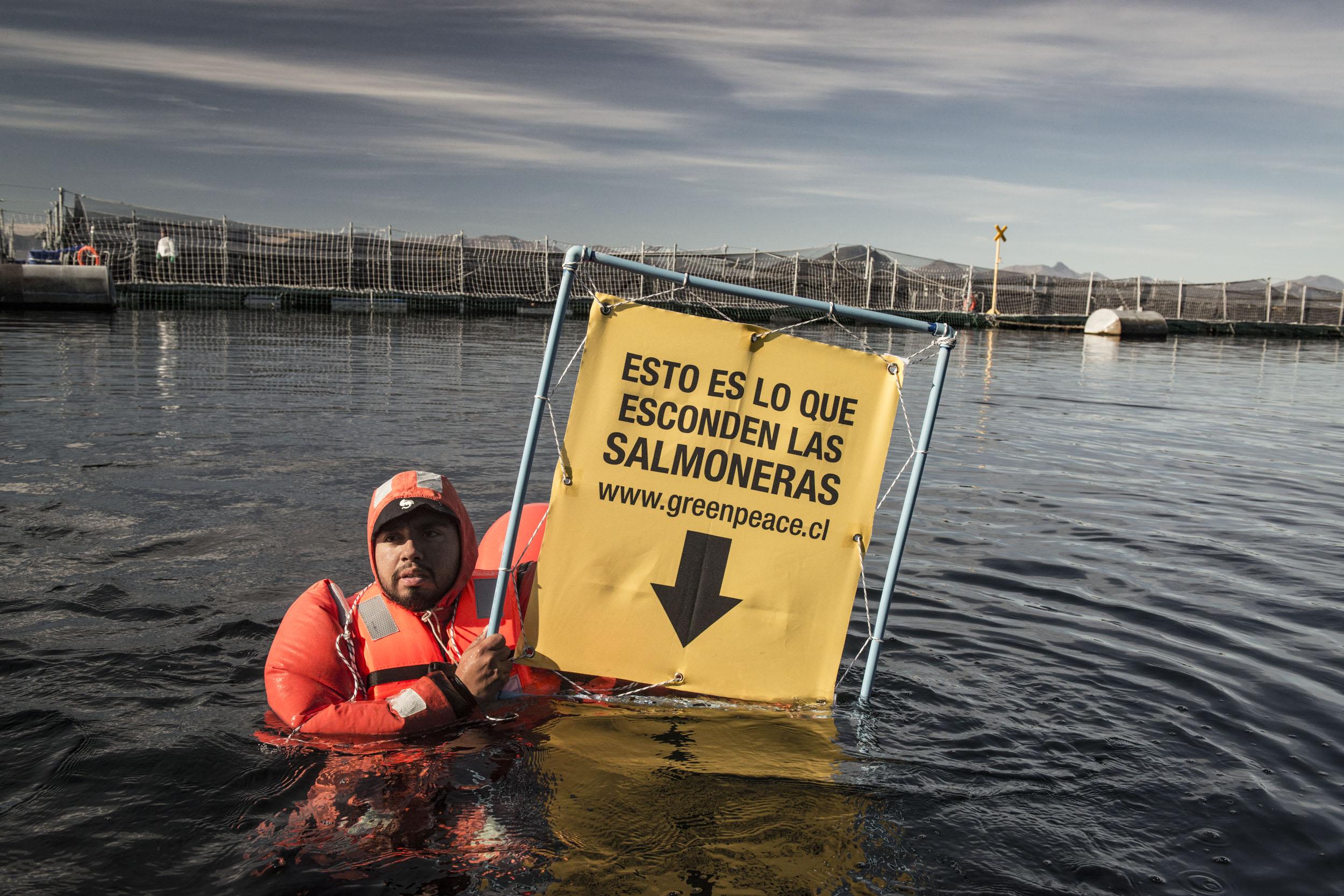 """Greenpeace por nuevas denuncias contra salmonera Nova Austral: """"La industria queda contra las cuerdas"""""""