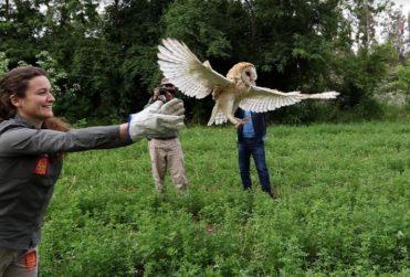 Centro de Rehabilitación Parque Safari reinsertó a 1 de cada 3 animales en la naturaleza