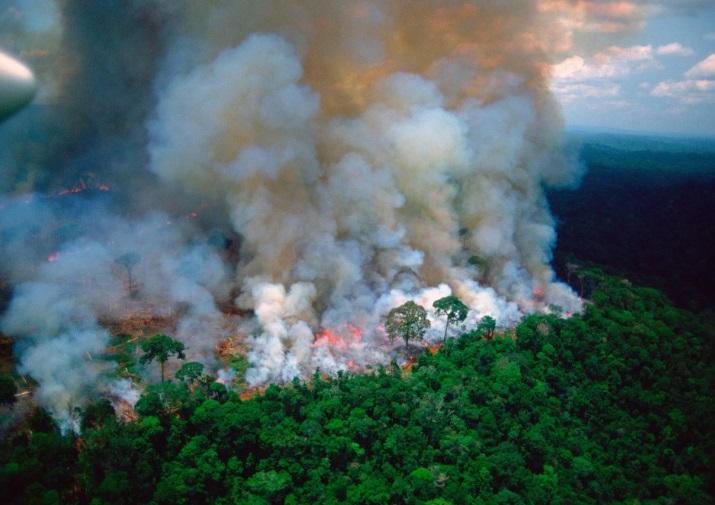 Emergencia en la Amazonía: 16 días de incendios amenazan el pulmón verde de América Latina