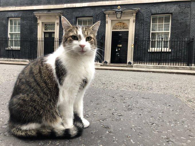 """""""Larry, el gato que ha durado más que los últimos Primeros Ministros en la calle Downing"""""""