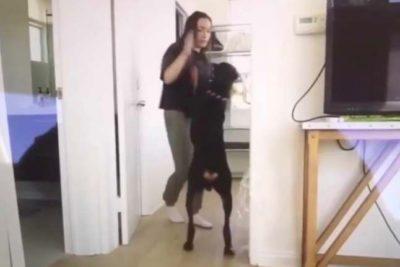 Youtuber Brooke Houts subió un video maltratando a su perro y sus fans no se lo perdonaron