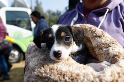 Científicos confirman presencia de nueva raza de perro chileno