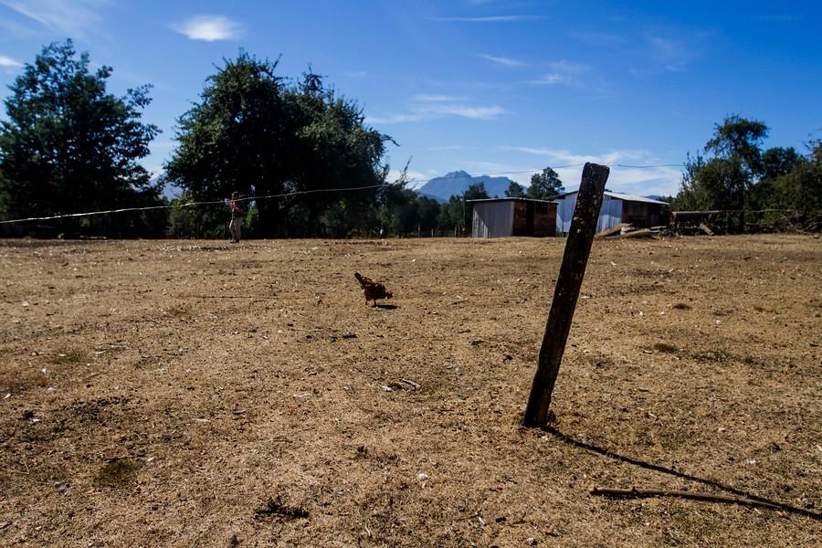 """""""Agricultura accede a solicitud de Intendencia y declara emergencia agrícola en Maule"""""""