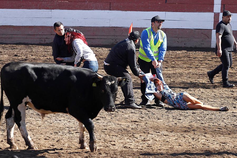 Rodeos: medialuna de La Ligua fue incendiada por activistas animalistas