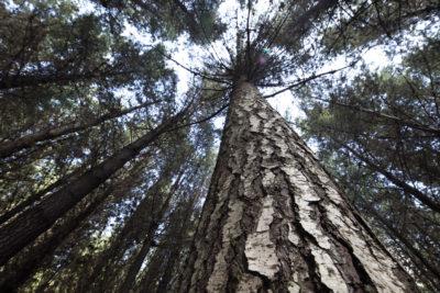 La madera, un factor clave para el desarrollo sustentable