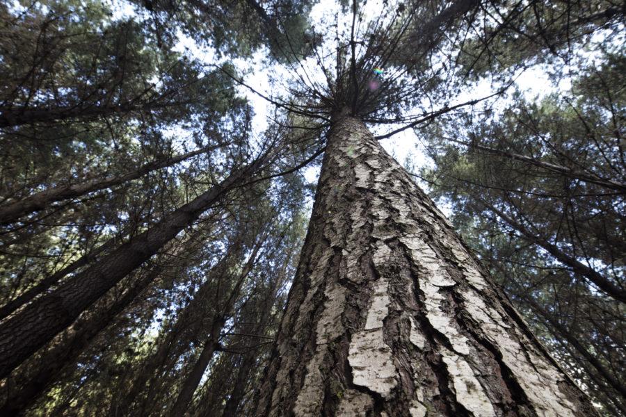 """""""La madera, un factor clave para el desarrollo sustentable"""""""