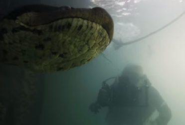 Buzos se encuentran cara a cara con anaconda de siete metros
