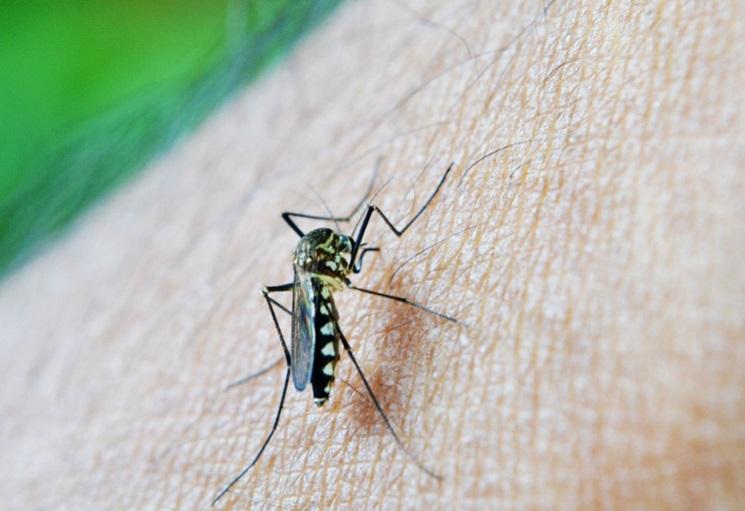 Honduras: A 135 aumentan los fallecidos por dengue hemorrágico