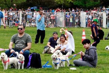 PETPelusa: el festival de mascotas que se tomará Parque O'Higgins