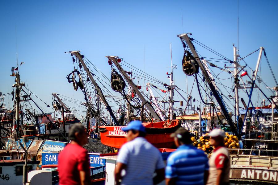 Efecto de la Ley de la Jibia: despiden a 401 trabajadores de Valparaíso y Coronel