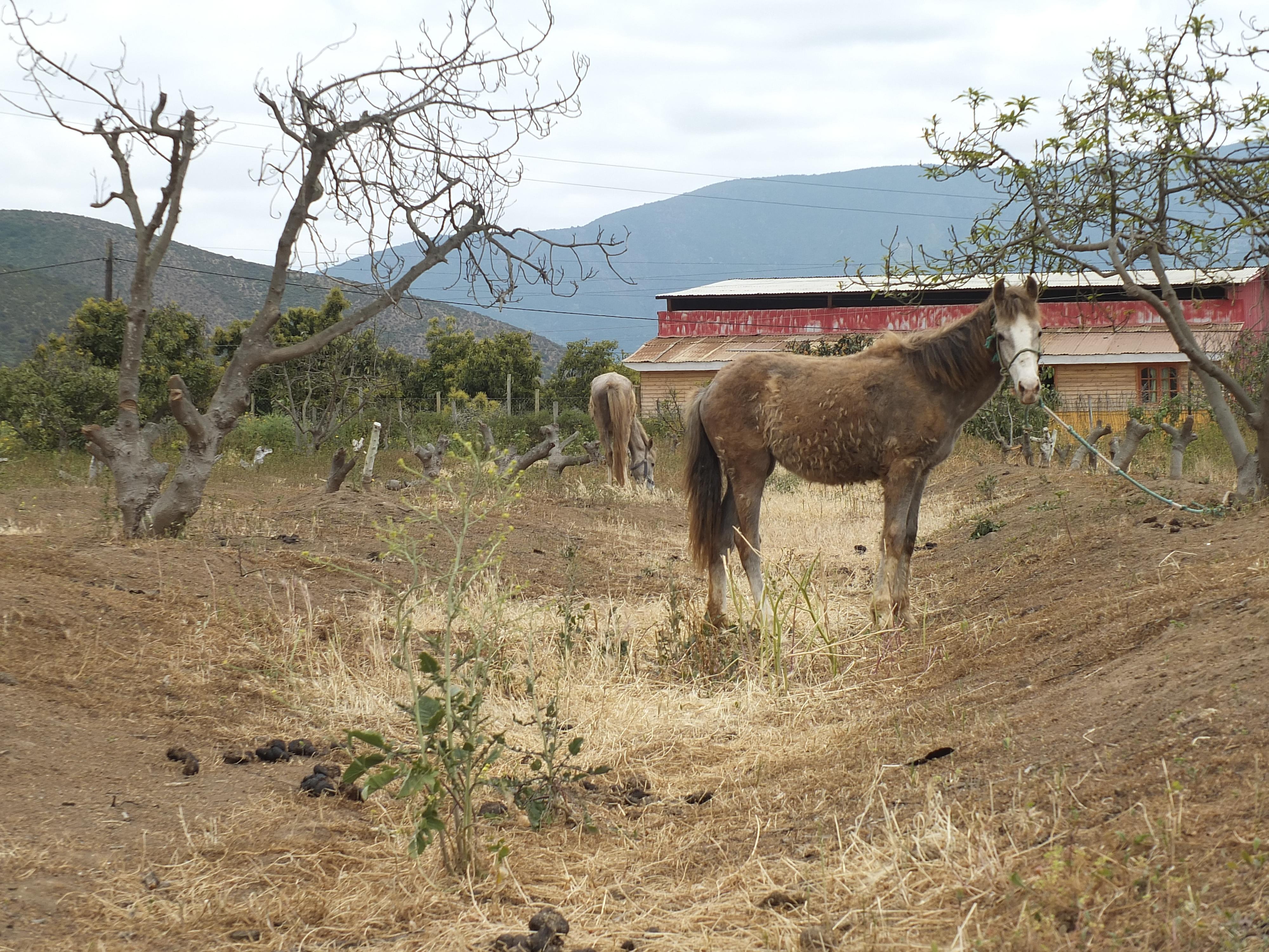Realizarán censo agrícola-ganadero en Petorca por crisis hídrica