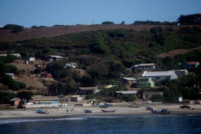 Crisis sanitaria en Isla Santa María: más de 100 animales muertos