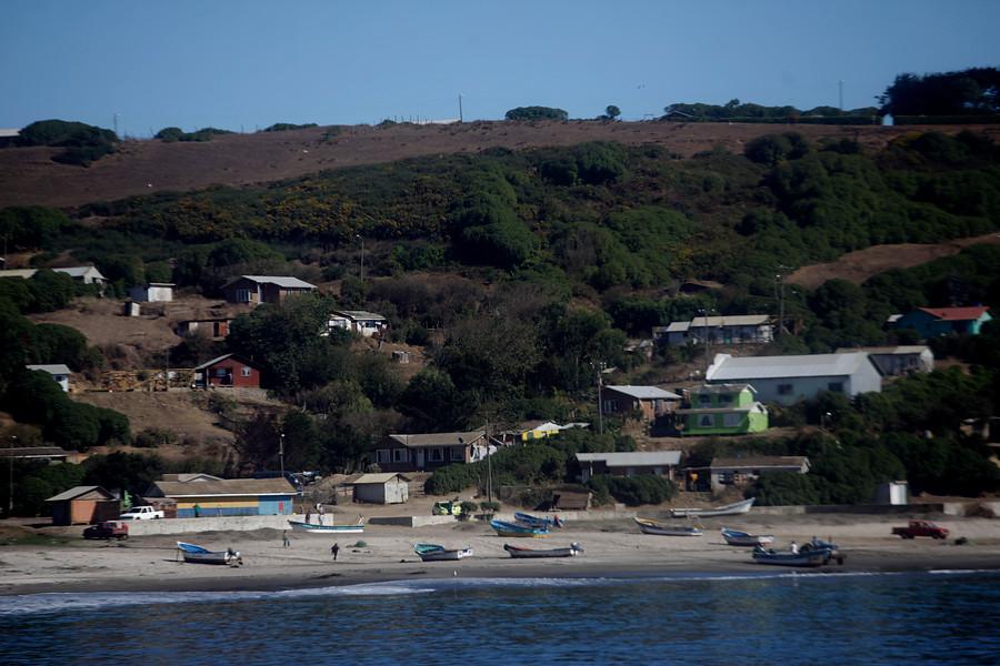 Crisis en Isla Santa María: más de 100 animales muertos