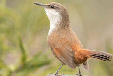 Cinco lugares para el avistamiento de aves