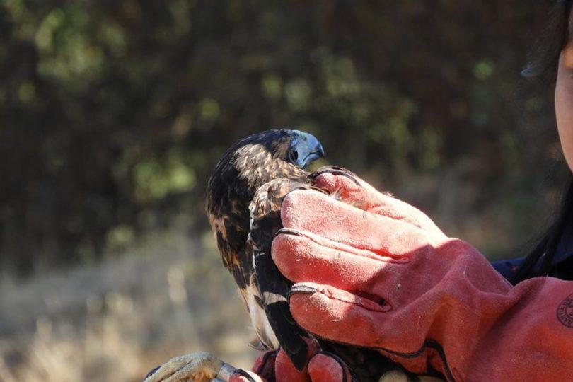 Educando a la comunidad sobre fauna silvestre: nueva forma de concientizar sobre conservación