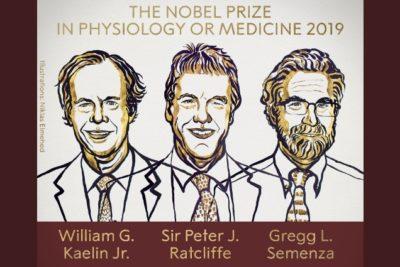Premian con Nobel de Medicina 2019 a científicos que investigaron cómo se adaptan las células al oxígeno