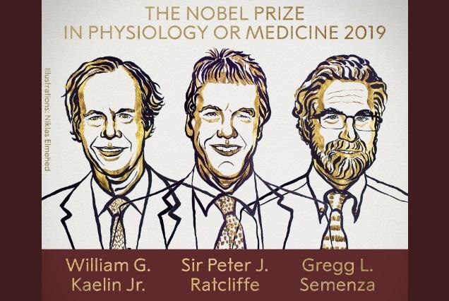 Nobel de Medicina 2019 a científicos que investigaron cómo se adaptan las células al oxígeno