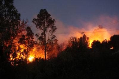 El círculo vicioso de los incendios forestales