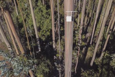 Sea the Forest: la nueva solución IoT para la detección temprana de incendios