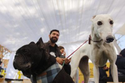 Municipalidad de Viña del Mar iniciará proceso para esterilizar a 5 mil mascotas