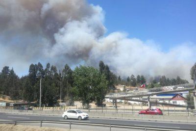 Decretan Alerta Roja en Valparaíso por incendio forestal en Placilla