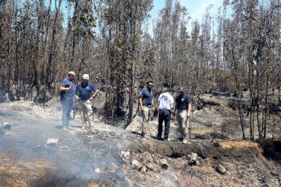 """Fiscalía reconoció """"antecedentes"""" sobre intencionalidad por incendios forestales"""