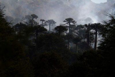COP25: Chile se adjudica más de US$ 89 millones para aumento del bosque nativo