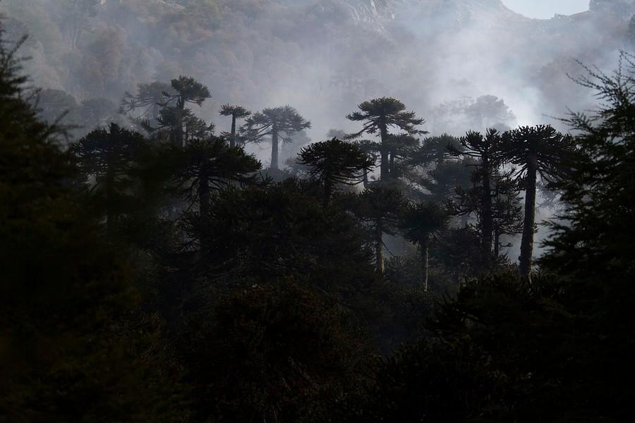 """""""COP25: Chile se adjudica más de US$ 89 millones para aumento del bosque nativo"""""""