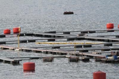 FNE acusa colusión de empresas de alimento para salmón y pide US$70 millones de multa