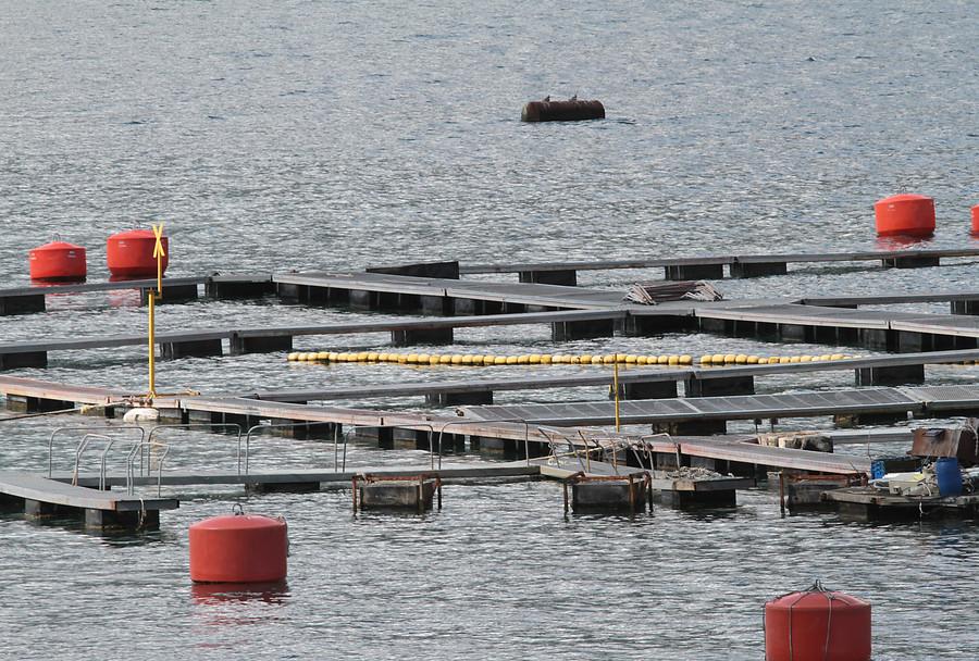 FNE acusa colusión de empresas de alimento para salmón