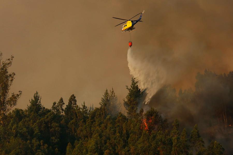 Reserva Nonguén se ve amenazada por incendio forestal en Chiguayante